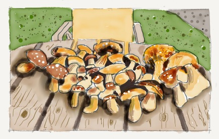 Raccolta di funghi porcini in Val di Funes