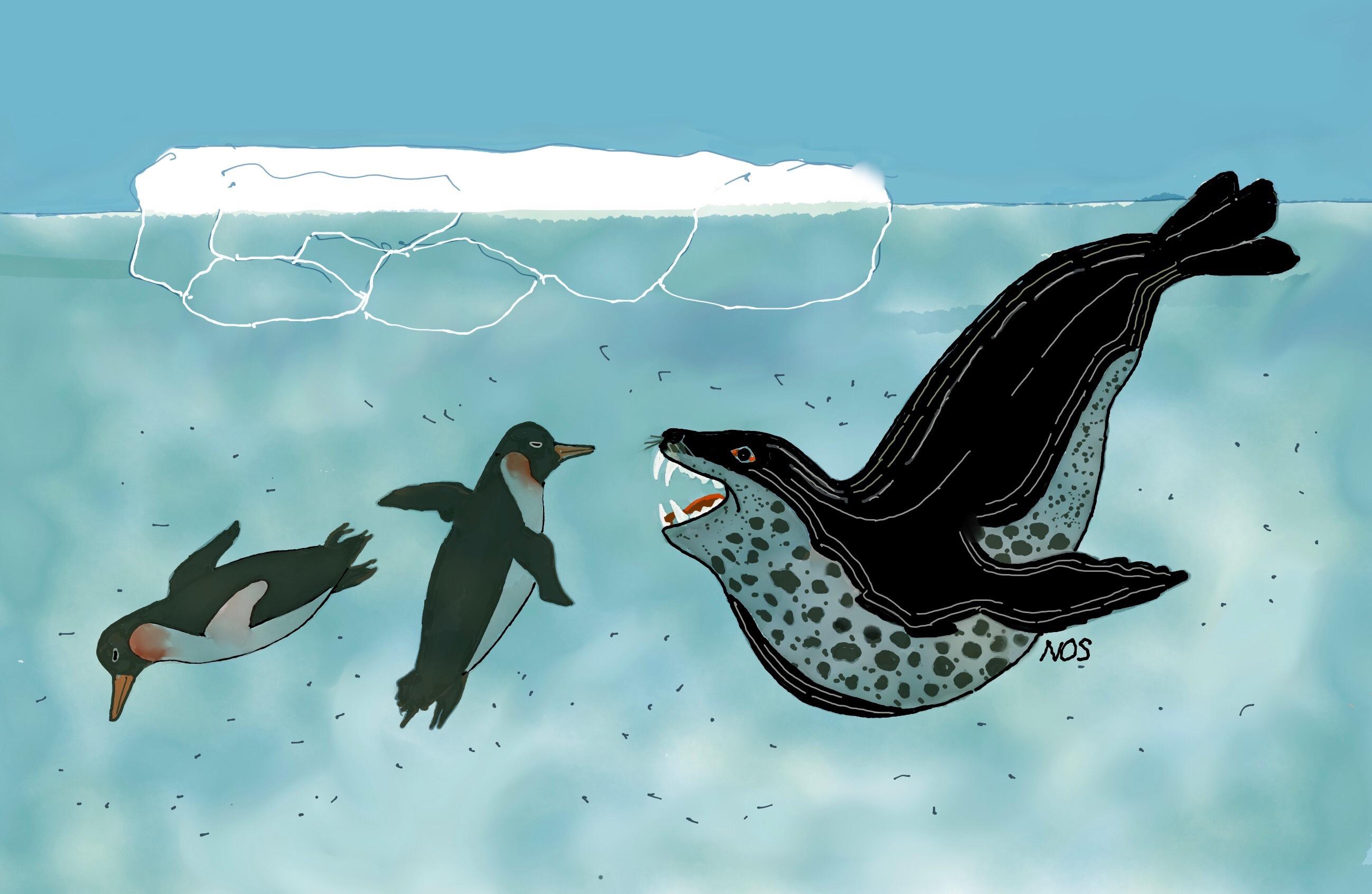 la foca leo e i pinguini-1