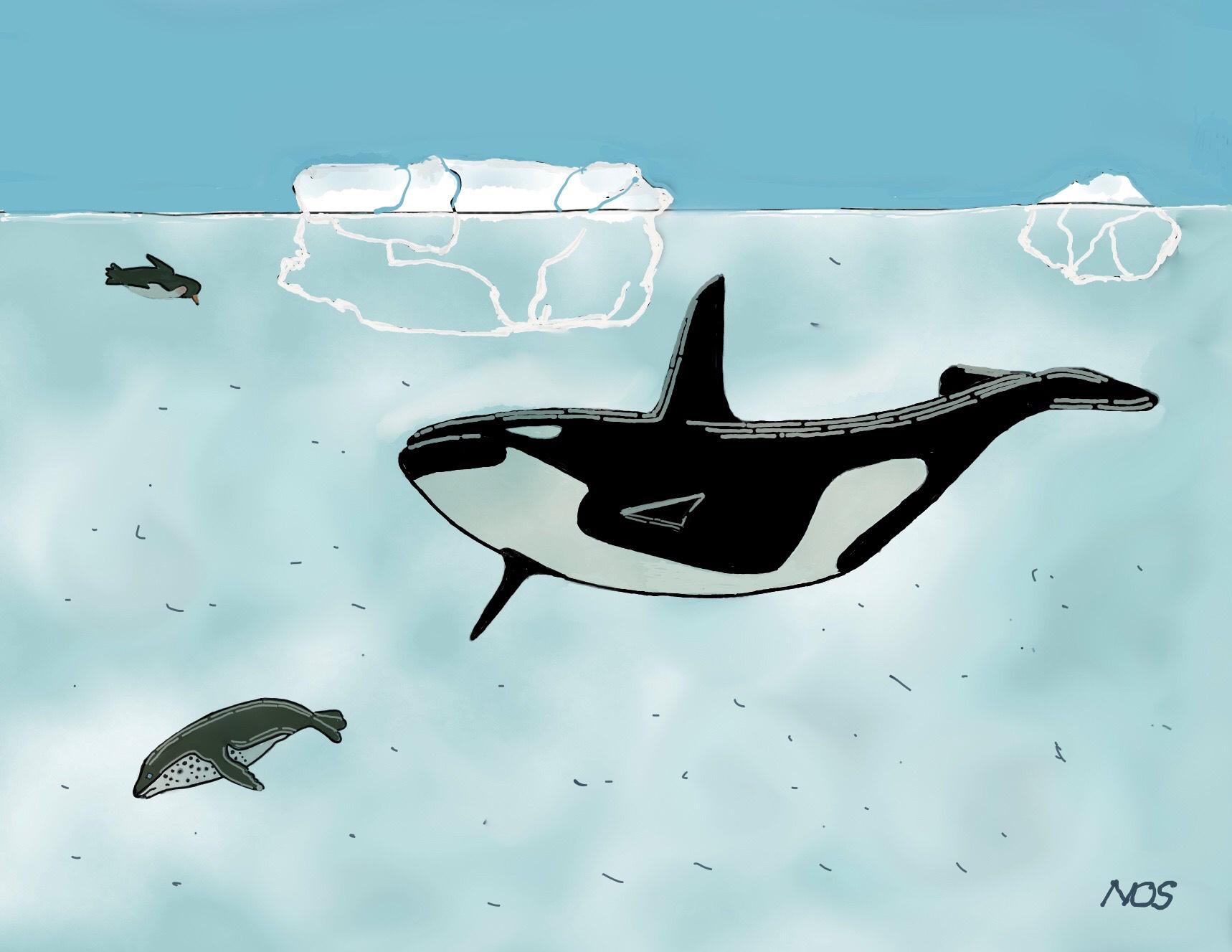 la orca e la foca